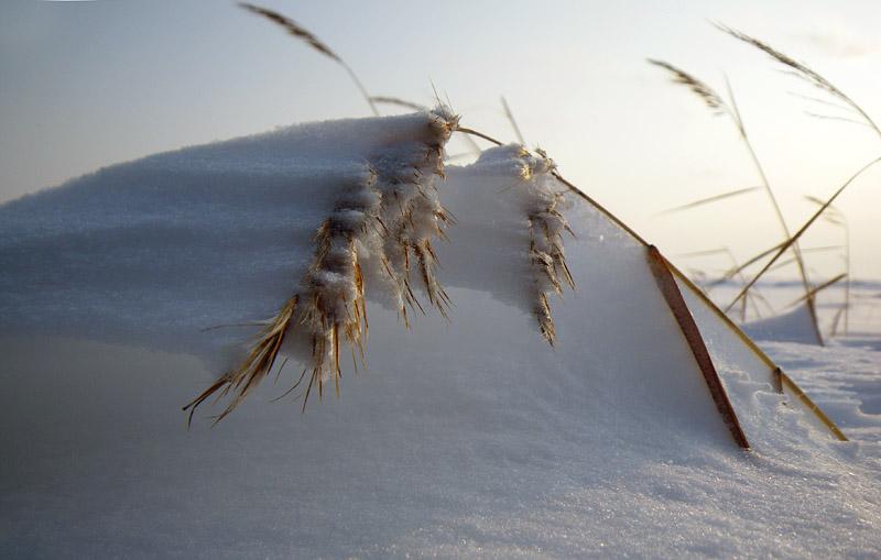 lumest kaar puhtulaiul
